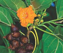 Pitcairn Island, Big Flower - Authentication